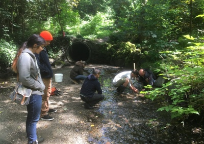 Invertebrate sampling in Still Creek June 2018