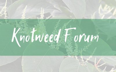 Knotweed Forum