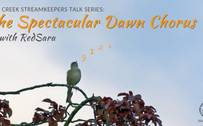 The Spectacular Dawn Chorus with RedSara