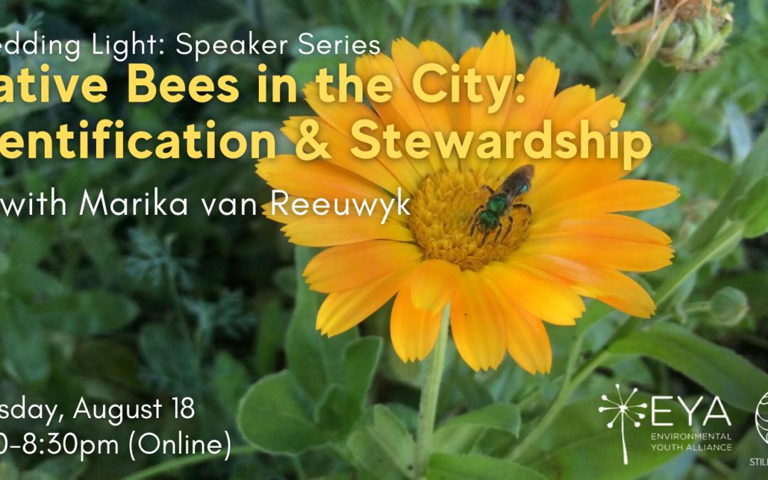 Native Bees in the City: Identification & Stewardship with Marika van Reeuwyk
